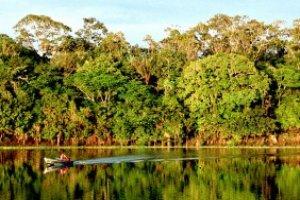 Estudos Amazônicos