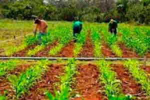 Introdução à Agropecuária