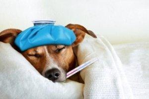 Introdução à Homeopatia Animal Veterinária