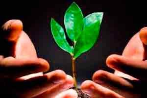 Gestão do Meio Ambiente: Sustentabilidade e Educação Ambiental