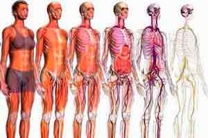 Introdução à Anatomia dos Sistemas