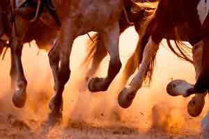 Casqueamento e Ferrageamento em Equinos