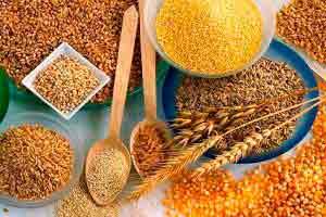 Classificador de grãos