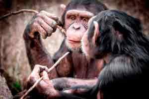 Introdução à Primatologia