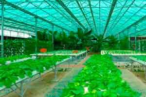 Cultivo orgânico e não orgânico