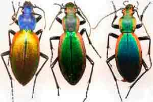 Introdução à Entomologia