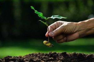 Formação de Coletores de Sementes Florestais Nativas