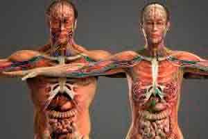 Introdução à Fisiologia Geral