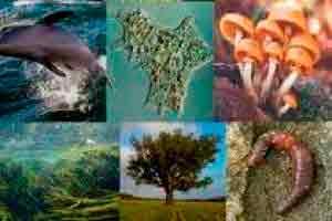 Seres Vivos e o Meio Ambiente