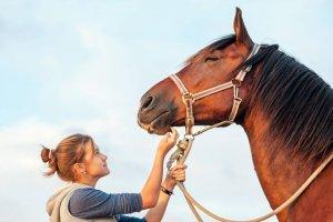 Auxiliar de Veterinaria para Equinos